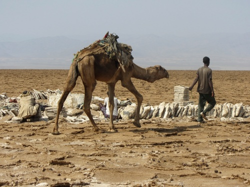 Salt Miner Danakil with Camel